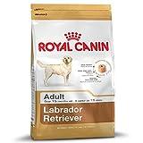 Royal Canin Labrador Retriever - Cibo secco per cani per adulti da 15 mesi o più anziani, confezione da 2 x 12 kg