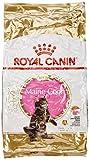 ROYAL CANIN Cibo Secco per Gatti Maine Coon Kitten - 10000 gr