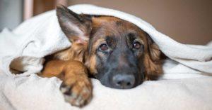 Come fermare la diarrea al cane